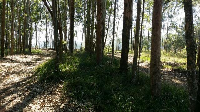 Condomínio de chácaras em Sapiranga - Vivendas do Campo - Foto 10