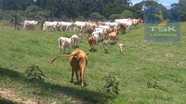 Fa0009 fazenda à venda, 605000 m² por r$ 3.150.000 - zona rural - quitandinha/pr - Foto 8