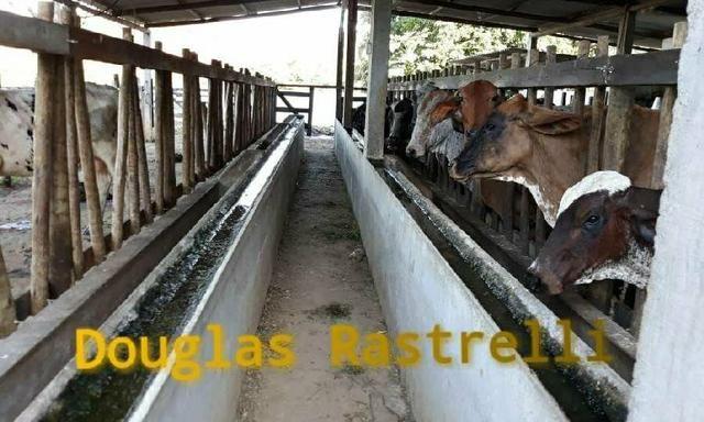 Belíssimo sítio em Cachoeiras de Macacu RJ 122 oportunidade!!! - Foto 3