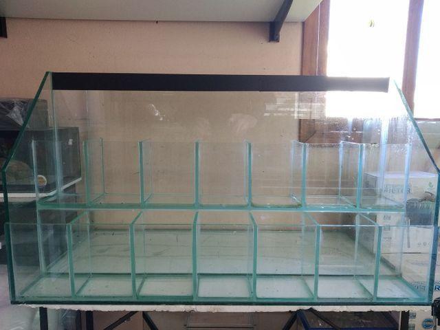 Betteira, aquário, Betta, loja aquário