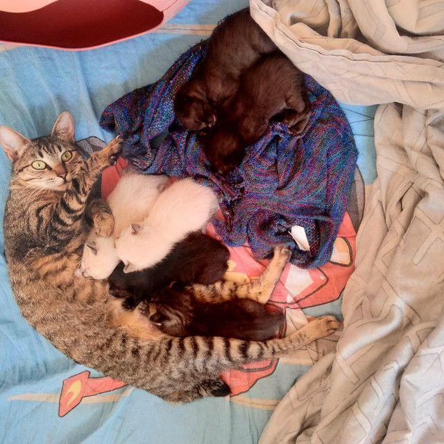 Doa se filhotes de gato - Foto 2