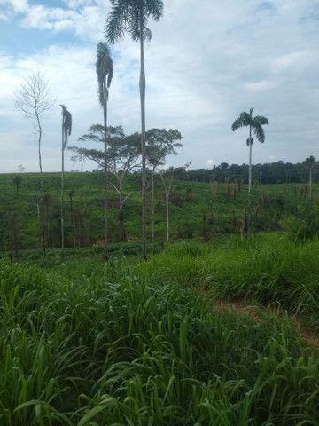 Vendo fazenda  - Foto 3