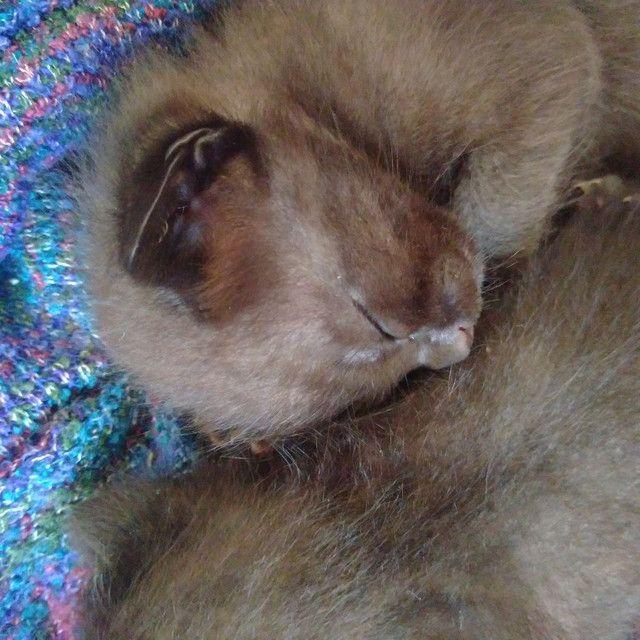 Doa se filhotes de gato - Foto 6