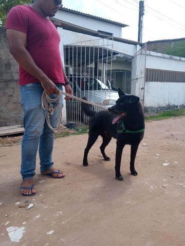 Doa-se Cachorro - Foto 4