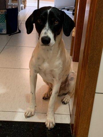 Cachorro para adoção responsável  - Foto 2