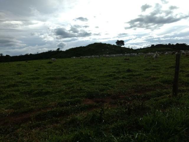 Fazenda de 150 alqueires, com 120 aberto 65 km de Guarantã do Norte -MT - Foto 3