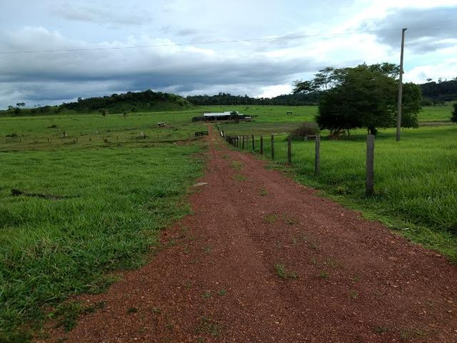 Fazenda de 150 alqueires, com 120 aberto 65 km de Guarantã do Norte -MT - Foto 13
