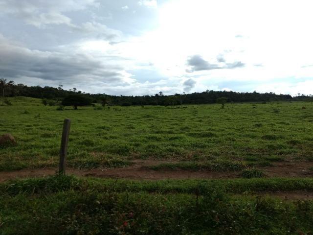 Fazenda de 150 alqueires, com 120 aberto 65 km de Guarantã do Norte -MT - Foto 11