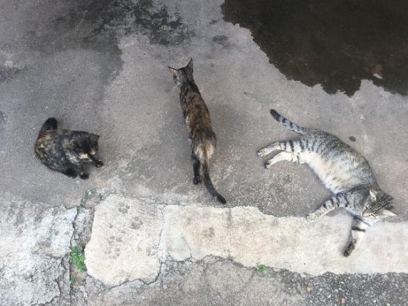 Gatinhas abandonadas precisando de um lar urgente