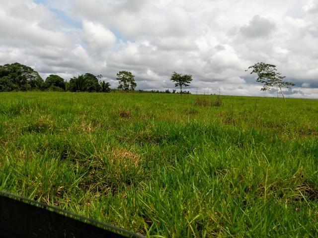 Fazenda 140 alqueires um luxo de boa ref#159 - Foto 13