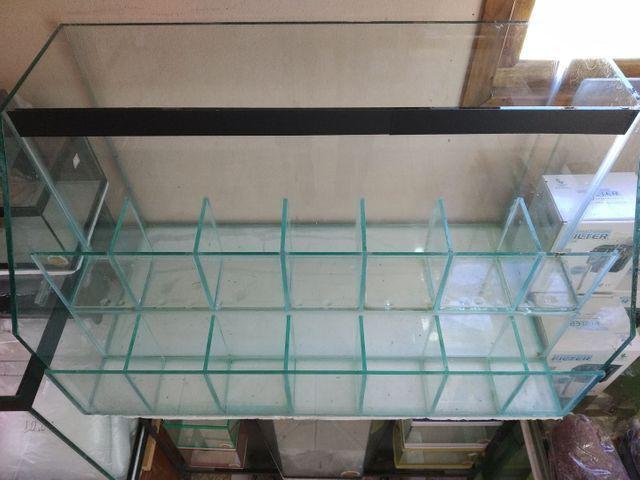 Betteira, aquário, Betta, loja aquário - Foto 4