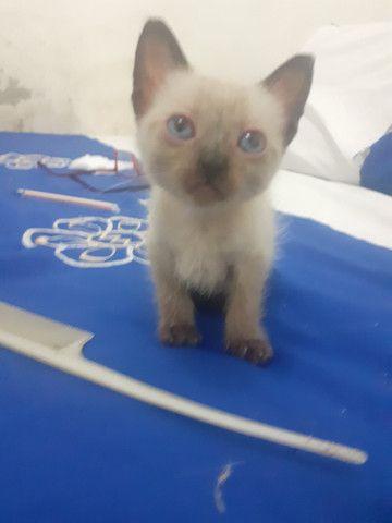 Gatos para adoção - Foto 2