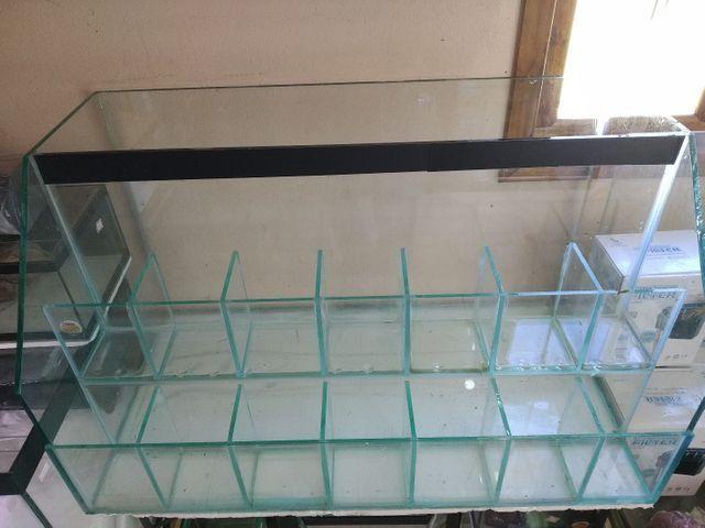 Betteira, aquário, Betta, loja aquário - Foto 3