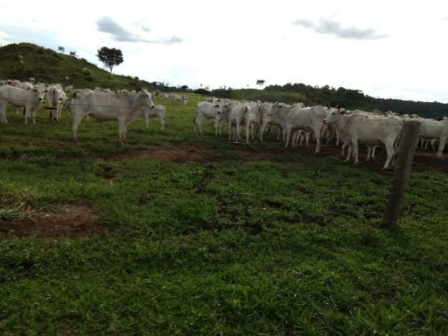 Fazenda de 150 alqueires, com 120 aberto 65 km de Guarantã do Norte -MT - Foto 6
