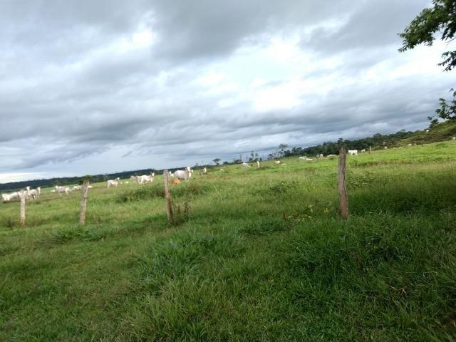 Fazenda de 150 alqueires, com 120 aberto 65 km de Guarantã do Norte -MT - Foto 4