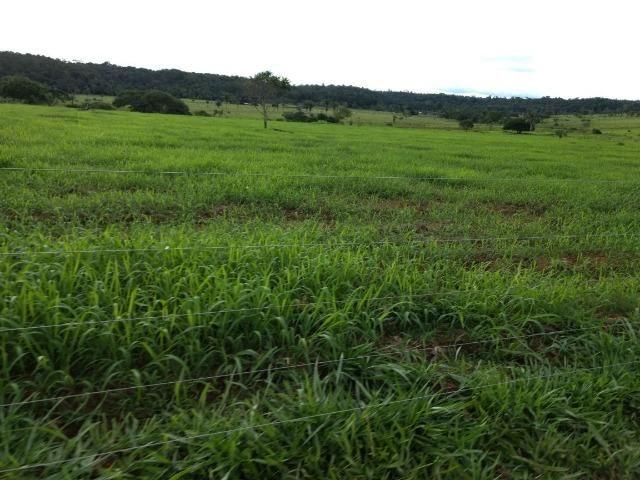 Fazenda de 150 alqueires, com 120 aberto 65 km de Guarantã do Norte -MT - Foto 10