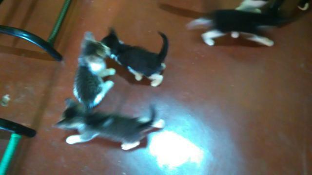 Doação gatos - Foto 5