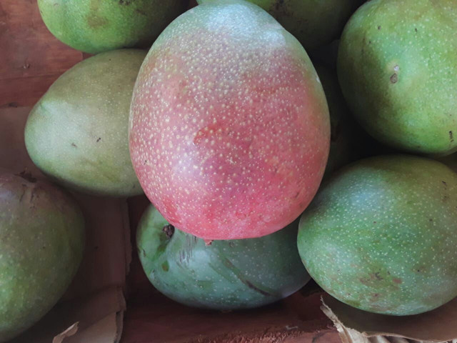 mangas rosa e coquinha sacola cheia por apenas cinco reais - Foto 2