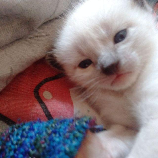Doa se filhotes de gato - Foto 4