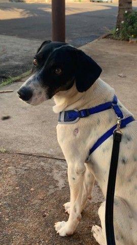 Cachorro para adoção responsável  - Foto 5