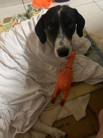 Cachorro para adoção responsável  - Foto 4