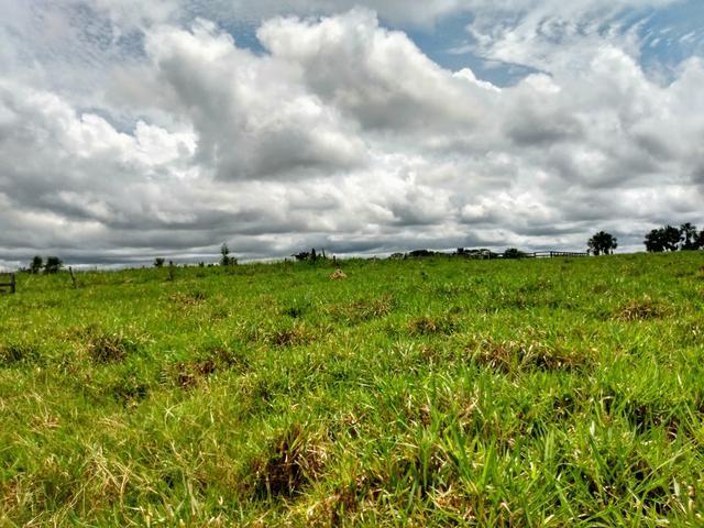 Fazenda 140 alqueires um luxo de boa ref#159 - Foto 9