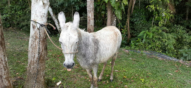 Vendo burro  - Foto 3