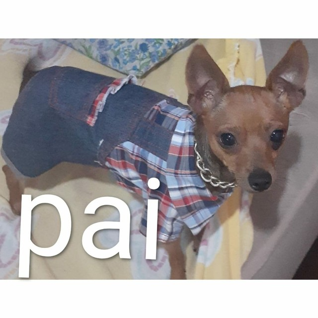 Pets - Foto 2