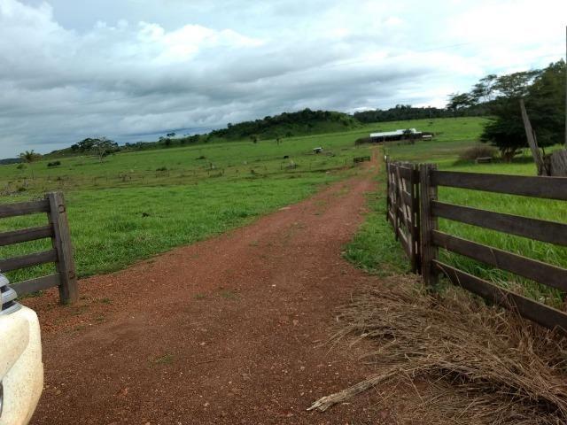 Fazenda de 150 alqueires, com 120 aberto 65 km de Guarantã do Norte -MT - Foto 12