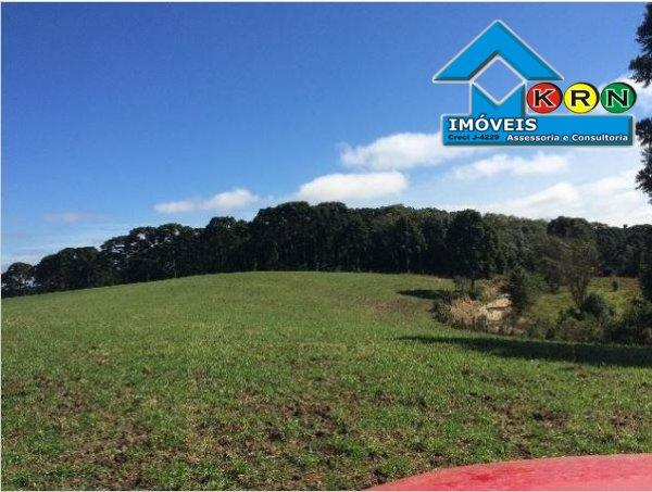 Fazenda - Fazenda a Venda no bairro Área Rural de Ponta Grossa - Ponta Grossa, P... - Foto 16