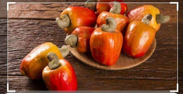 Polpas de Frutas concentradas direto da Bahia - Foto 5