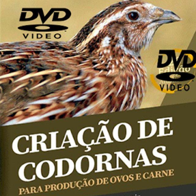 Curso Criação De Codorna - Aprenda A Criar Codornas - Curso Em Vídeo!