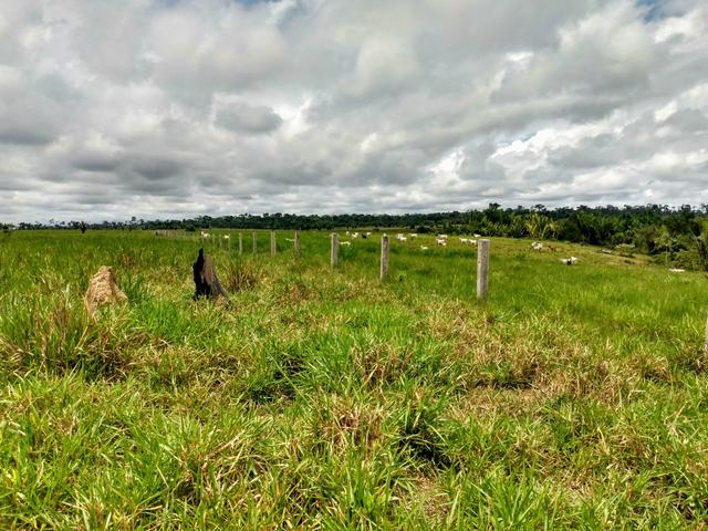 Fazenda 140 alqueires um luxo de boa ref#159 - Foto 8