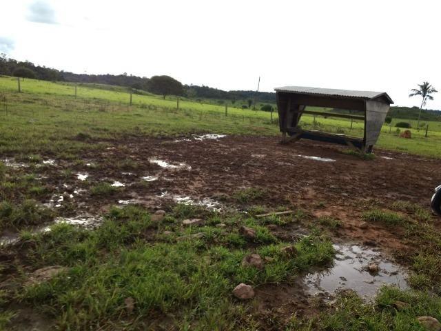 Fazenda de 150 alqueires, com 120 aberto 65 km de Guarantã do Norte -MT - Foto 7