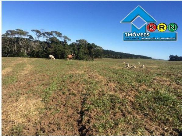 Fazenda - Fazenda a Venda no bairro Área Rural de Ponta Grossa - Ponta Grossa, P... - Foto 17