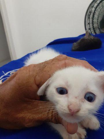 Gatos para adoção - Foto 3