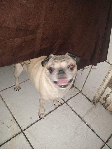 Pug - Foto 2