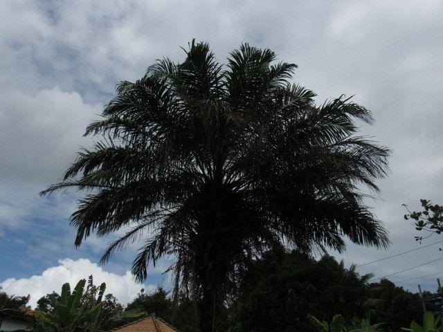 Terreno em Itacaré Bahia - Foto 10
