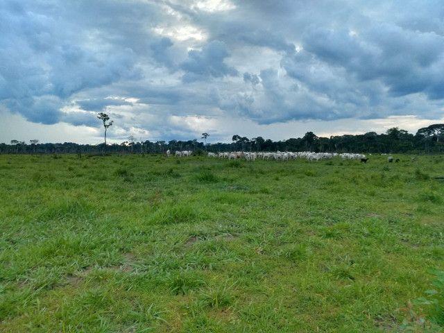 Vendo fazenda  - Foto 6