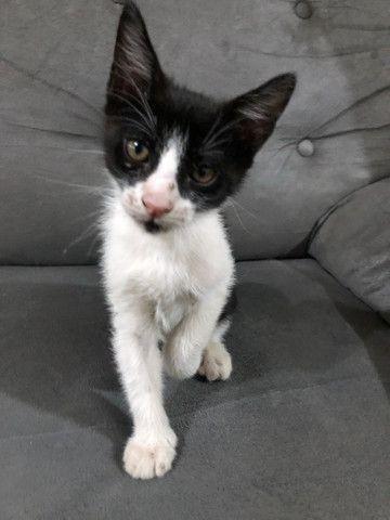 Doação de gato filhote