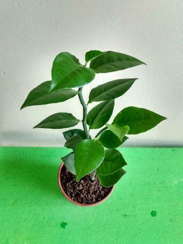 Vendo várias variedades de plantas