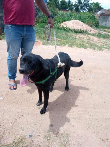 Doa-se Cachorro - Foto 2