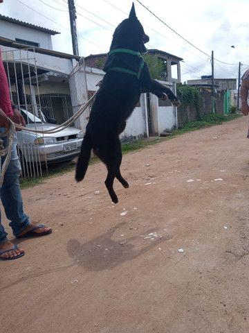 Doa-se Cachorro - Foto 3