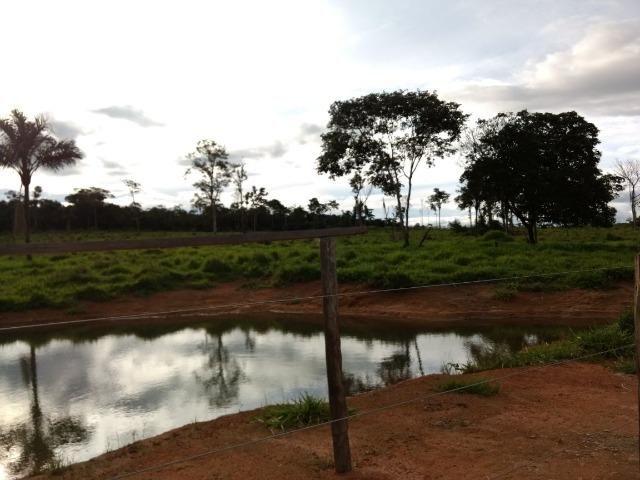 Fazenda de 150 alqueires, com 120 aberto 65 km de Guarantã do Norte -MT - Foto 15
