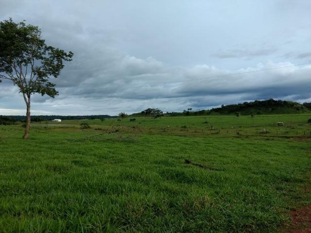 Fazenda de 150 alqueires, com 120 aberto 65 km de Guarantã do Norte -MT