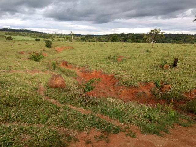 Fazenda de 150 alqueires, com 120 aberto 65 km de Guarantã do Norte -MT - Foto 14
