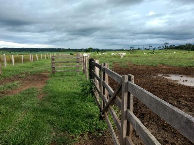 Fazenda de 150 alqueires, com 120 aberto 65 km de Guarantã do Norte -MT - Foto 8