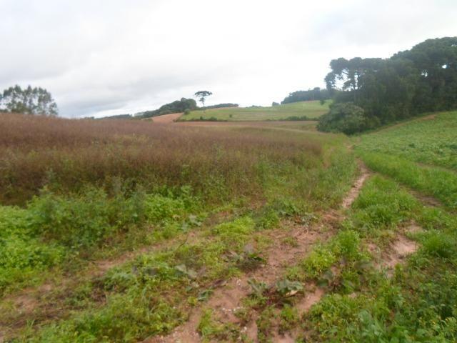 Terreno 1 alqueire e meio - Foto 8