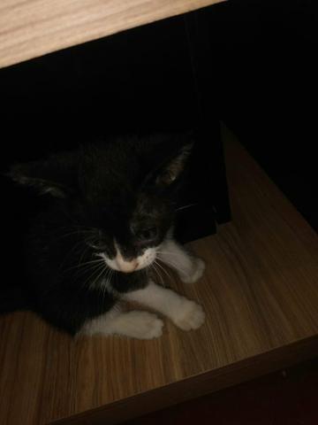 Doação gatos - Foto 4