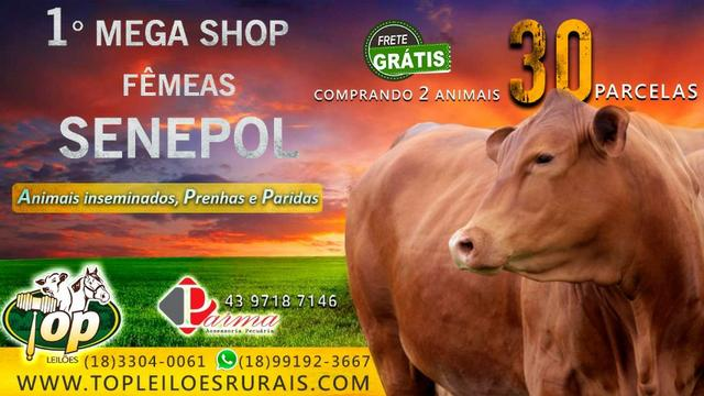 ''784'' Senepol Shopping Online em 30 parcelas - LEIA - Foto 2